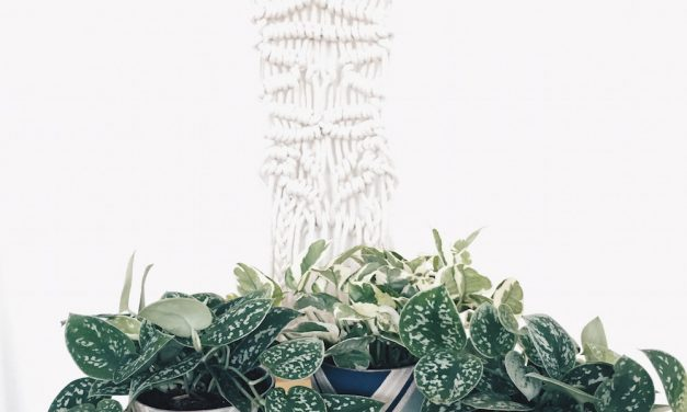 Put a Plant on It | Clean Air, Easy Care: Pretty, Tough Houseplants that Purify