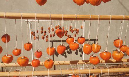 Hoshigaki | The Patient Art of Watching Persimmons Dry