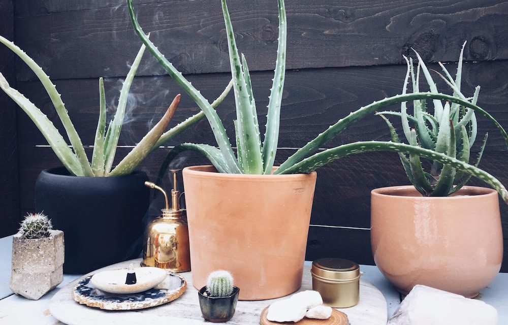 Put A Plant On It | Aloe Edition