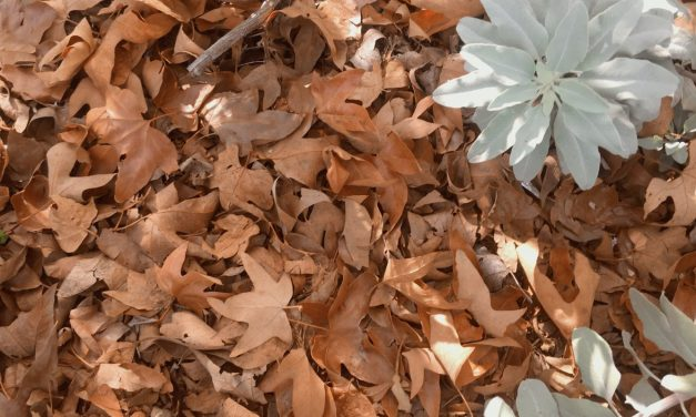 Falling into Autumn | What's an Equinox Scientifically?