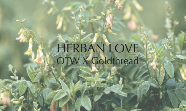 Herban Love with Goldthread Herbs   Astragalus