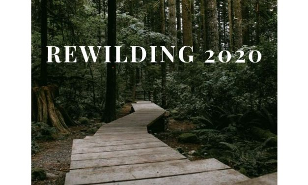 Announcing Rewilding 2020 & Open Registration: A weREWILD & Wolf Tribe Retreat